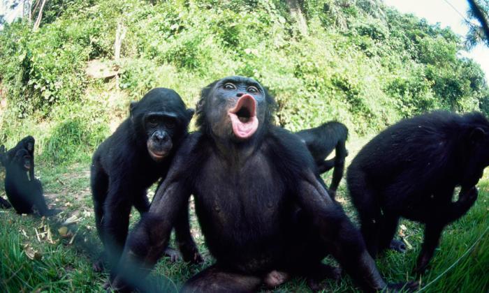 Bonobinhos lindos!