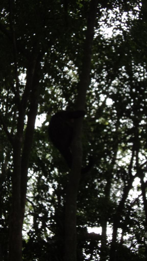 não dá pra ver mas ali tem um macaco...